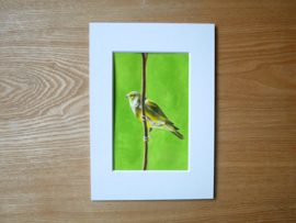 Greenfinch gouache painting