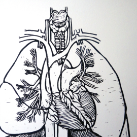 Hand printed linoprint medical illustration anatomy of heart and lungs