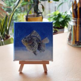 Tiny painting 'Sluierstaart' olieverf op doek, 10x10 cm