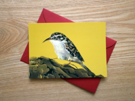 Tree creeper postcard with envelope