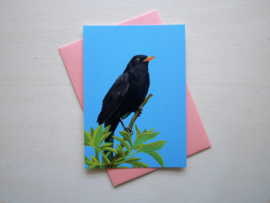 Blackbird postcard with envelope