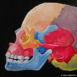 Menselijke schedel olieverf schildering op doek, 18x12 cm