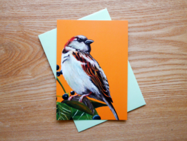 House sparrow postcard with envelope