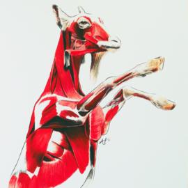 Anatomie van de geit A4 artprint
