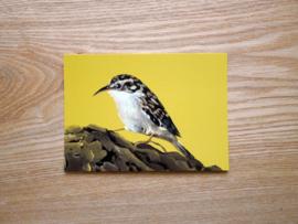 Boomkruiper kaart met gekleurde envelop