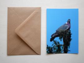 Houtduif kaart met envelop
