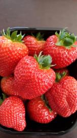 verse aardbeien 500gr