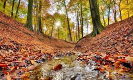 Bosbeek herfst NW6604