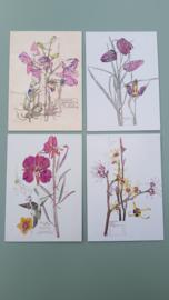 Kaartenmapje Fritillaria