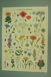 Poster Wilde Bloemen incl. koker