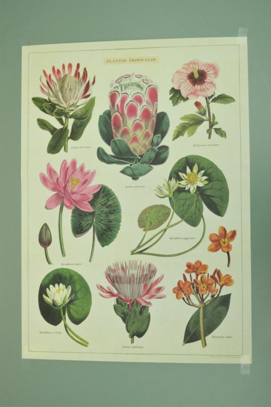 Poster Tropische Planten incl. koker