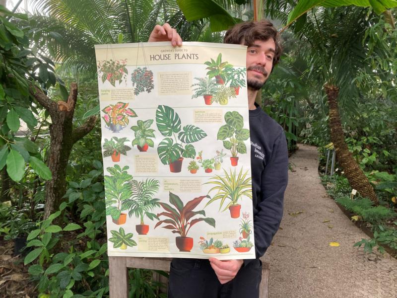 Poster Kamerplanten incl. koker