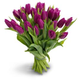Tulpen verkrijgbaar