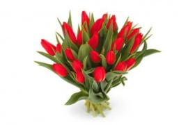 Tulpen  verkrijgbaar vanaf eind januari