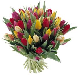Mix Tulpen verkrijgbaar