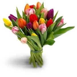 Tulpen abonnement