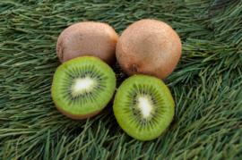 Kiwi (EKO)
