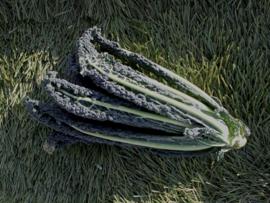Palmkool (Cavolo nero)