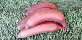 Rode bananen