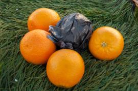 Perssinaasappelen (11 stuks)