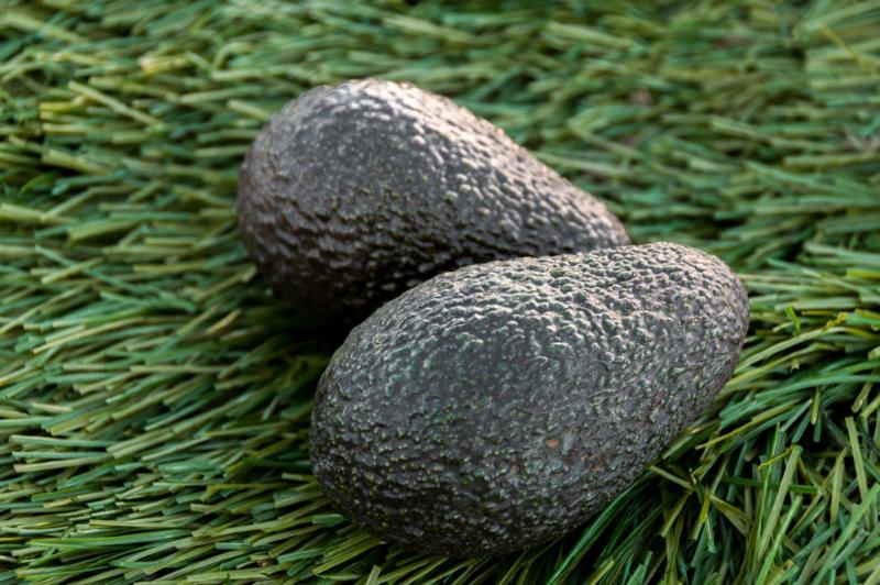 Avocado RTE