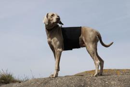 Back on Track Honden Rugbeschermer