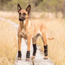 Back on Track Honden Peesbeschermer