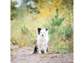 Huid + Vacht Hondenbrokken
