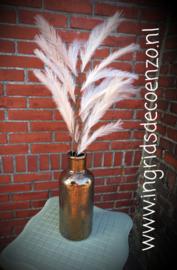 Panicle Grass  Cream
