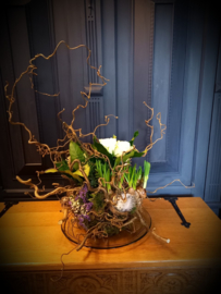 Voorjaars bol op glazenschaal