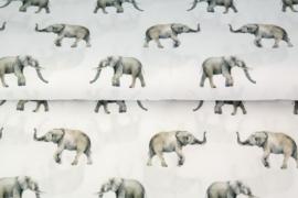Katoen olifant