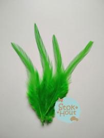 fazantveren 'licht groen', setje van 10 stuks