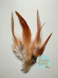 fazantveren 'bruin', setje van 10 stuks