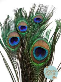 pauwenveren 'oog', setje van 5 stuks