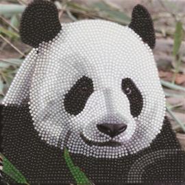 Diamond Painting Wenskaart  Funny Face Panda