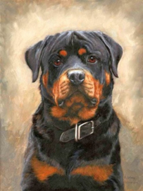 Diamond Painting ML Budget Rottweiler