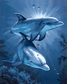 Wizardi Dolphins Dating