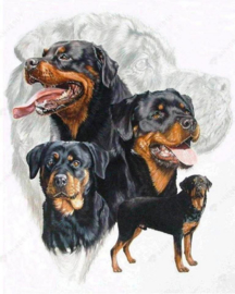 Diamond Painting Miss Coccinelle  Rottweiler 40x50
