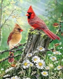 Diamond Painting Miss Coccinelle Birds 40x50