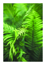 A4 fotoprint 'Fern'