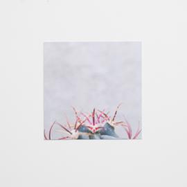 Cactus 10x10cm