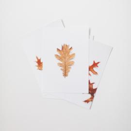 Kaartenset herfst - set 1