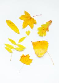 A4 fotoprint 'Gele Herfst'