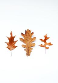 A4 fotoprint - Trio herfst