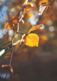 A4 fotoprint 'Blad in het bos'