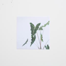 Botanische kaartenset 10x10cm