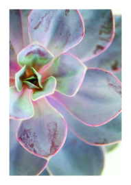 A4 poster Succulent