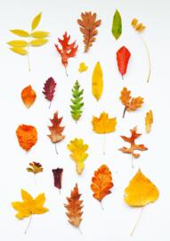 A4 fotoprint - Herfstige bladeren
