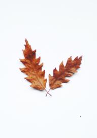 A4 fotoprint - Herfstbladeren