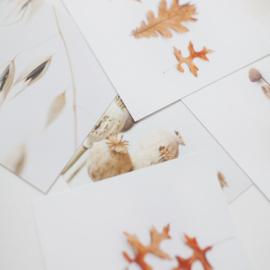 Herfst kaartenset 10x10 cm